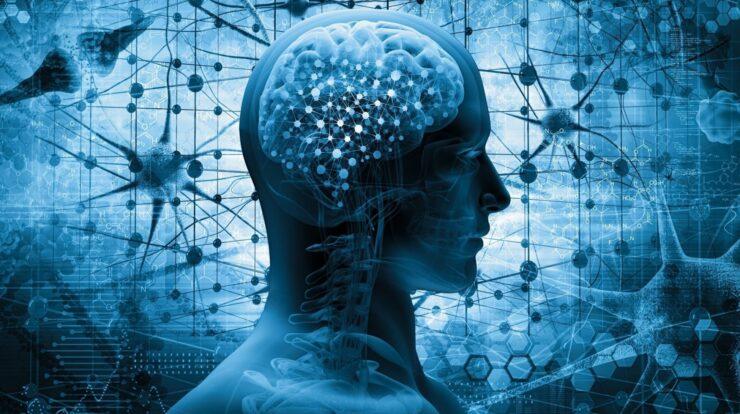 Brains Age